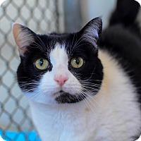 Adopt A Pet :: Clover - Greenwood, SC