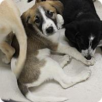 Adopt A Pet :: Cian - Regina, SK
