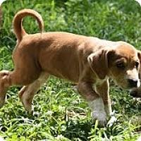 Adopt A Pet :: Sox - Staunton, VA