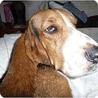 Adopt A Pet :: Treasure - Phoenix, AZ