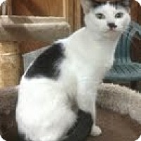 Adopt A Pet :: Lucile - Modesto, CA