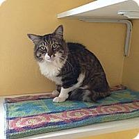 Adopt A Pet :: Wesley - Lancaster, MA