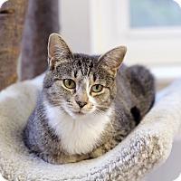 Adopt A Pet :: Margarita Ville - Chicago, IL