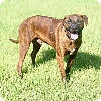 Adopt A Pet :: Justin - Williston, FL