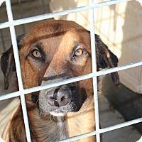 Adopt A Pet :: VanHalen - Harmony, Glocester, RI