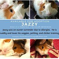 Adopt A Pet :: Jazzy - Aurora, IL