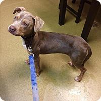 Adopt A Pet :: Magnolia - Riverside, CA