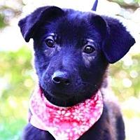 Adopt A Pet :: Gracie - San Ramon, CA