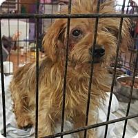 Adopt A Pet :: Baby - Livingston, TX