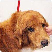 Adopt A Pet :: Rusty IV - BIRMINGHAM, AL