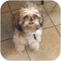 Adopt A Pet :: APRIL - Georgetown, KY