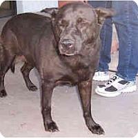 Adopt A Pet :: Eliza - Scottsdale, AZ