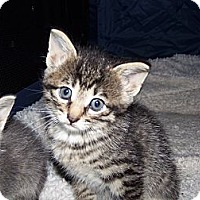 Adopt A Pet :: Jemma - Roseville, MI
