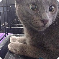 Adopt A Pet :: Heather - Seminole, FL