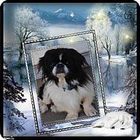Adopt A Pet :: Eli - Crowley, LA