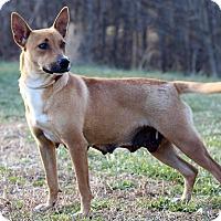 Adopt A Pet :: Jenny - Waldorf, MD