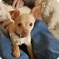 Adopt A Pet :: Rubio - Jacksonville, FL