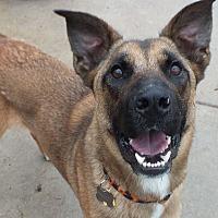 Adopt A Pet :: Phantom - Minneapolis, MN