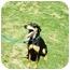 Photo 1 - Doberman Pinscher/Labrador Retriever Mix Dog for adoption in Santee, California - Layla