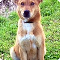 Adopt A Pet :: BARNEY - Glastonbury, CT