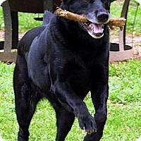 Adopt A Pet :: Petunia - Lewisville, IN
