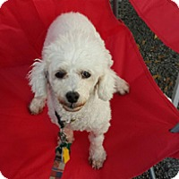 Adopt A Pet :: KATY - Melbourne, FL