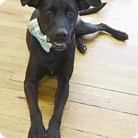 Adopt A Pet :: Landon - Marietta, GA