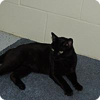 Adopt A Pet :: Clash - Washington, GA