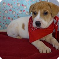 Adopt A Pet :: Nick - Manning, SC