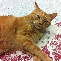 Adopt A Pet :: Garfield - Warminster, PA