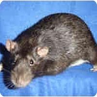 Adopt A Pet :: Shadow - Winner, SD