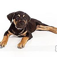 Adopt A Pet :: Shawn - Scottsdale, AZ