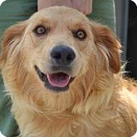 Adopt A Pet :: Honey - Foster, RI