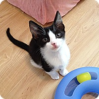 Adopt A Pet :: Rory - Waxhaw, NC