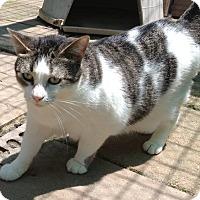 Adopt A Pet :: Morgan - Centerton, AR