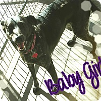 Adopt A Pet :: Baby Girl - Odessa, TX