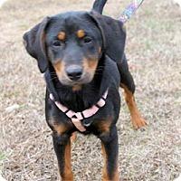 Adopt A Pet :: Cash - Atlanta, GA