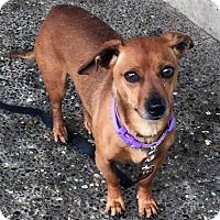 Adopt A Pet :: CHARLIE -sweet, quiet, dog-loving boy - Bainbridge Island, WA