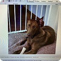 Adopt A Pet :: A - KEA - Vancouver, BC