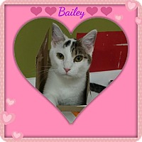 Adopt A Pet :: Bailey - Maryville, TN