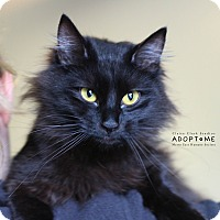 Adopt A Pet :: Libby - Edwardsville, IL