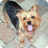 Adopt A Pet :: Gracey - Gulfport, FL