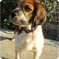 Adopt A Pet :: Magnum - Sugarland, TX