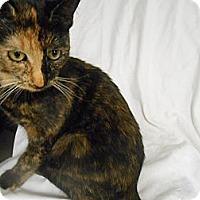 Adopt A Pet :: Ariel - Maywood, NJ