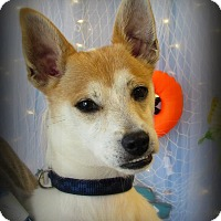 Adopt A Pet :: Rebel - Chesterfield, VA