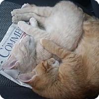 Adopt A Pet :: Front - Merrifield, VA