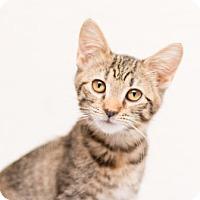 Adopt A Pet :: Honey - Fountain Hills, AZ