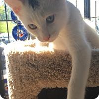 Adopt A Pet :: Mo - Horsham, PA