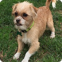 Adopt A Pet :: Russell 2 - San Francisco, CA