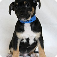 Adopt A Pet :: Cashew - Waldorf, MD